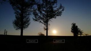 背景に夕日のある木の写真・画像素材[3226927]
