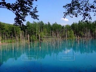 美瑛の青い池の写真・画像素材[3235048]