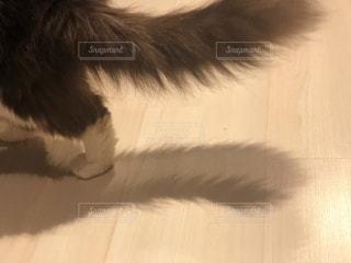 猫,動物,屋内,影,床,可愛い,しっぽ,長毛種,ハチワレ,ソックス,影すら可愛い,影まで愛して