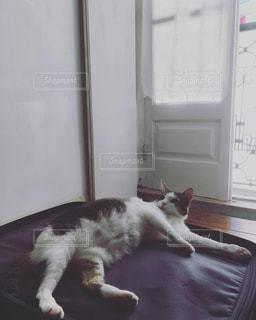 猫,動物,屋内,白,かわいい,寝転ぶ,スーツケース,キャット,寝そべり,キュート,旅支度,たわむれ,邪魔するネコ