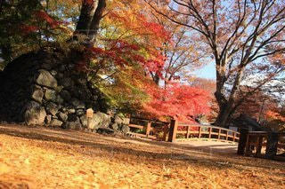 空,秋,橋,紅葉,屋外,葉,樹木,イチョウ
