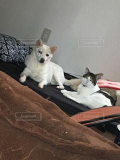 犬,動物,白,かわいい,座る,おデブ