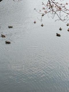 自然,公園,鳥,湖,水面