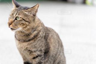 猫,風景,動物,黒,座る,台湾,見つめる,野生,視線,ネコ,ホウトン,ネコ科の動物