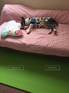 犬,寝てる,ブルテリア