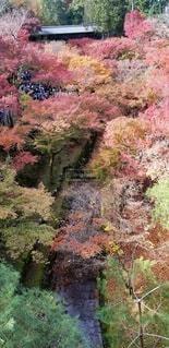 木々に囲まれた滝の写真・画像素材[3197753]