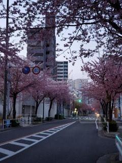 空,建物,屋外,樹木,都会,通り
