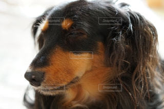 No.248062 犬