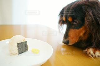 犬の写真・画像素材[389350]
