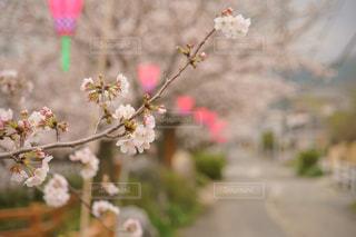 花 - No.426425