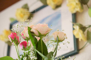 花の写真・画像素材[473436]