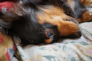 近くにベッドの上で横になっている猫のアップの写真・画像素材[1004674]