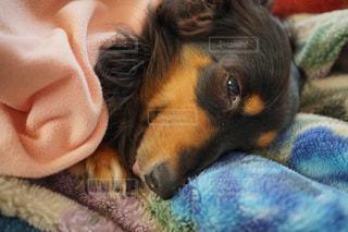 近くに犬のアップの写真・画像素材[1004684]
