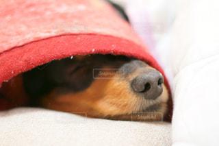 近くに犬のアップの写真・画像素材[1184243]