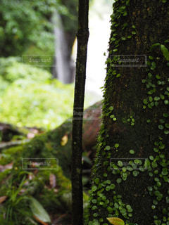 自然,森林,屋外,葉,樹木,草木,モス