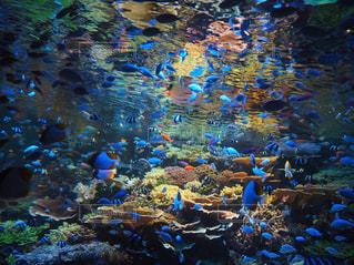水中の水の眺めの写真・画像素材[3178952]