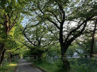 自然,風景,公園,屋外,緑,樹木,草木