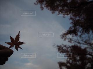 自然,風景,空,秋,葉,樹木,草木