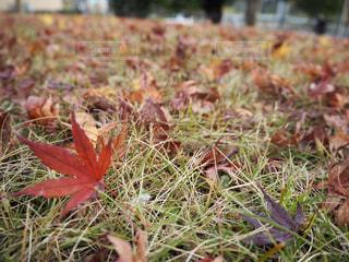 自然,秋,屋外,草,草木
