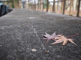 自然,秋,屋外,葉,樹木,地面,草木