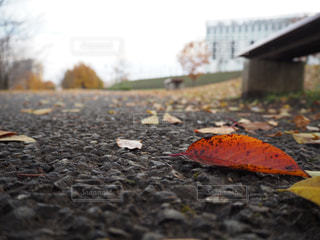 自然,風景,秋,屋外,葉,景色,樹木,地面,カエデ