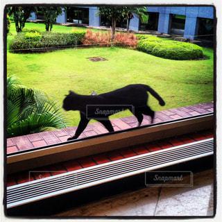 猫,風景,庭,散歩,影,窓際