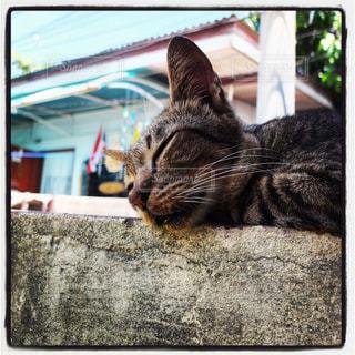 猫,風景,お昼寝