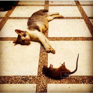 猫,ありがとう,ネズミ,お礼