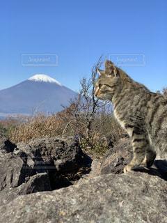 猫,風景,富士山,景色,登山,丹沢