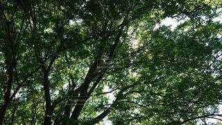木のクローズアップの写真・画像素材[3294350]
