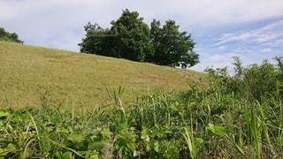 緑豊かな畑のクローズアップの写真・画像素材[3341424]