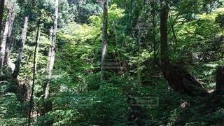 森の中の写真・画像素材[3352917]