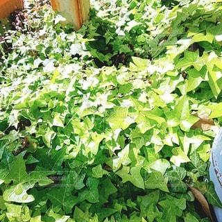 花,庭,屋外,緑,葉,広がる,ガーデン,運気上昇