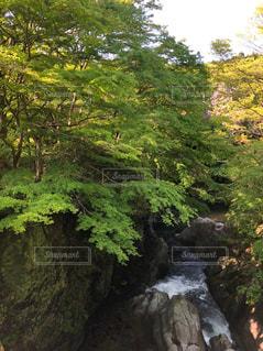 自然,風景,森林,木,綺麗,水,川,水面,葉,滝,樹木,岩,新緑,日本,マイナスイオン,リフレッシュ,美