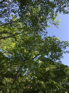 自然,風景,空,春,木,緑,青空,散歩,葉,樹木,新緑,癒し,日本,マイナスイオン,リフレッシュ,美