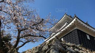 空,花,桜,屋外,浜松城