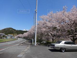空,桜,車,道路,桜並木,樹木,道,太田川