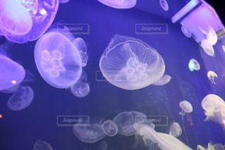 動物,魚,水族館,美ら海水族館,クラ ゲ,腔腸動物