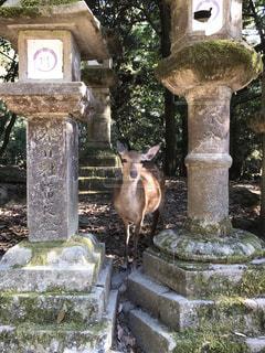 旅行,鹿,奈良,バンビ,お腹すいた,鹿煎餅ください