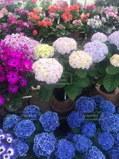 花,鮮やか,草木,ガーデン,#紫陽花#季節#雨