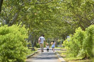 緑の公園を散歩する親子の写真・画像素材[3180784]