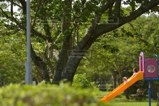 新緑の公園で遊ぶ幼い姉妹の写真・画像素材[3182403]