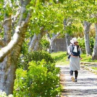 新緑の公園を散歩する親子の写真・画像素材[3186820]