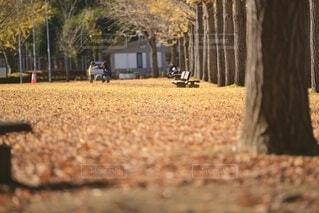 秋の公園で過ごす家族の写真・画像素材[3715719]