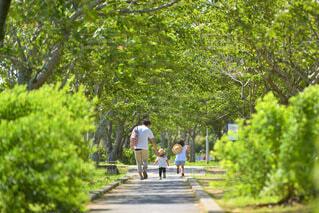 木の隣の通りを歩いている人々のグループの写真・画像素材[4007681]