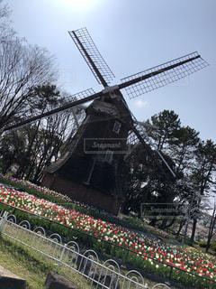 自然,空,公園,花,春,屋外,綺麗,風車,景色,チューリップ,樹木,花壇,景観,草木,インスタ映え