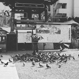動物,群衆,鳥,屋外,たくさん,ハト,黒と白