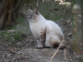 猫,動物,屋外,座る