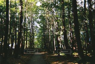 森の真ん中にある木の写真・画像素材[3178305]