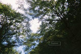 木のクローズアップの写真・画像素材[3178306]